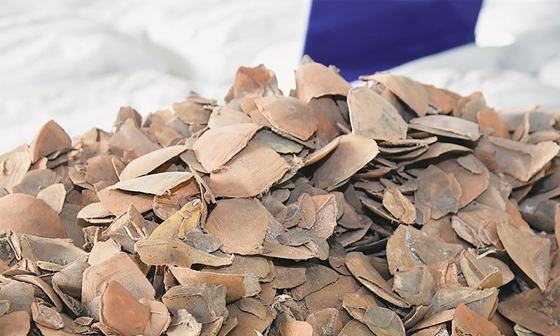 Pangolin scales sized by Thai customs officials. — AFP/File