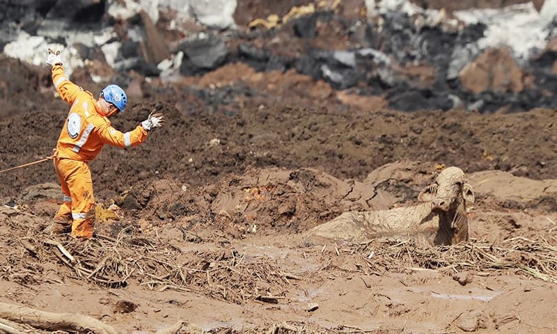 A rescue worker tries to reach a cow that is stuck in a field of mud. — AFP