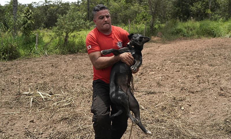Civil firefighter Leoncio Valverdes carries the dog away to safety. — AFP