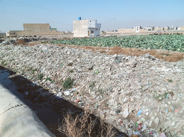 A FIELD of cauliflower and spinach near a drain in Arbab Town of Spinny Road area.—Photo by writer