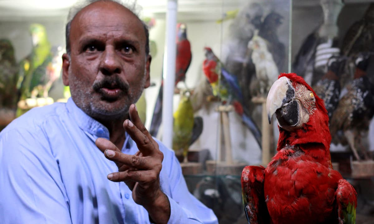 Chaman shows a taxidermied scarlet macaw