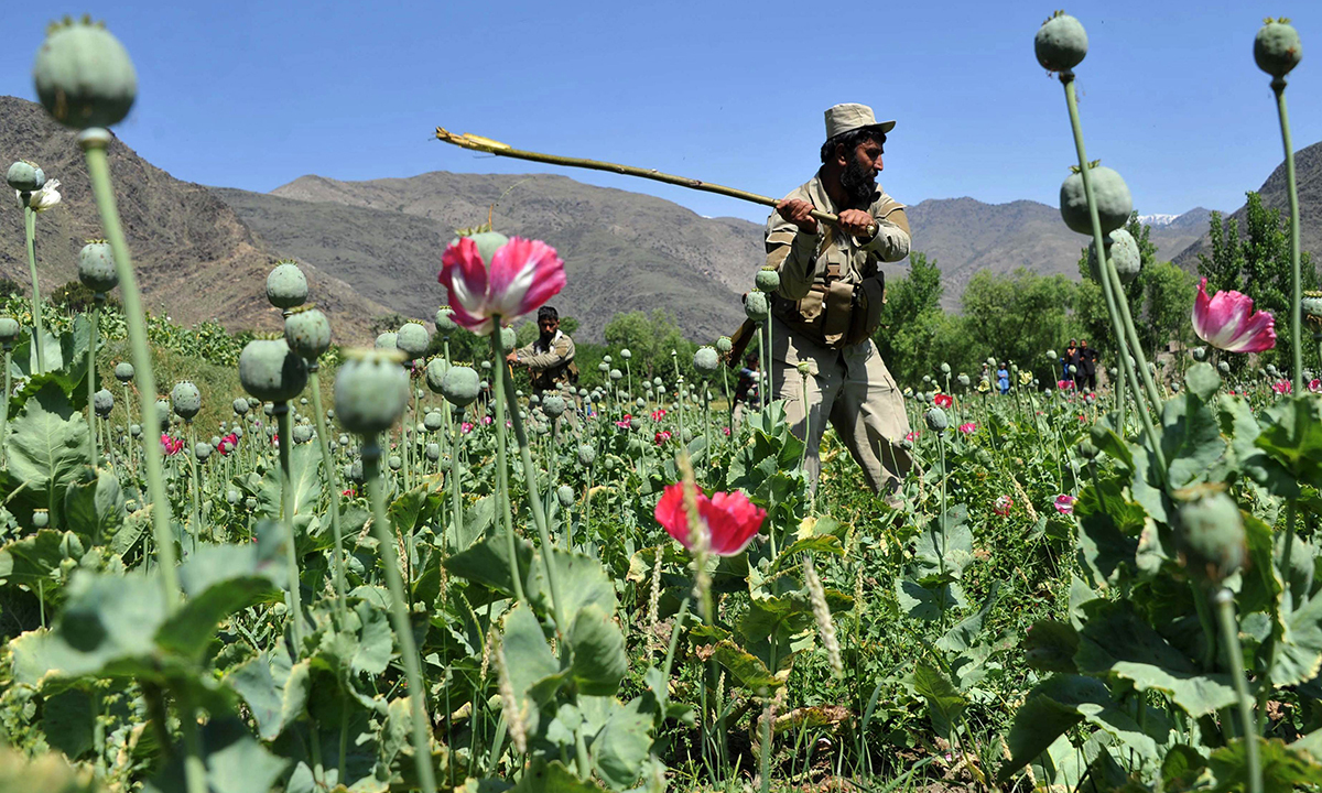 ANF and Balochistan CM to utilise all resources to curb drug cultivation and usage. — File photo