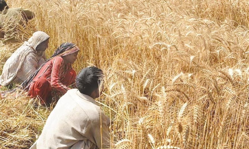 Pakistan is producing wheat at a rate of 2.89 tonnes per hectare. However, the country has to increase wheat production to over 3.2 tonnes per hectare by 2025 if food security is to be ensured.