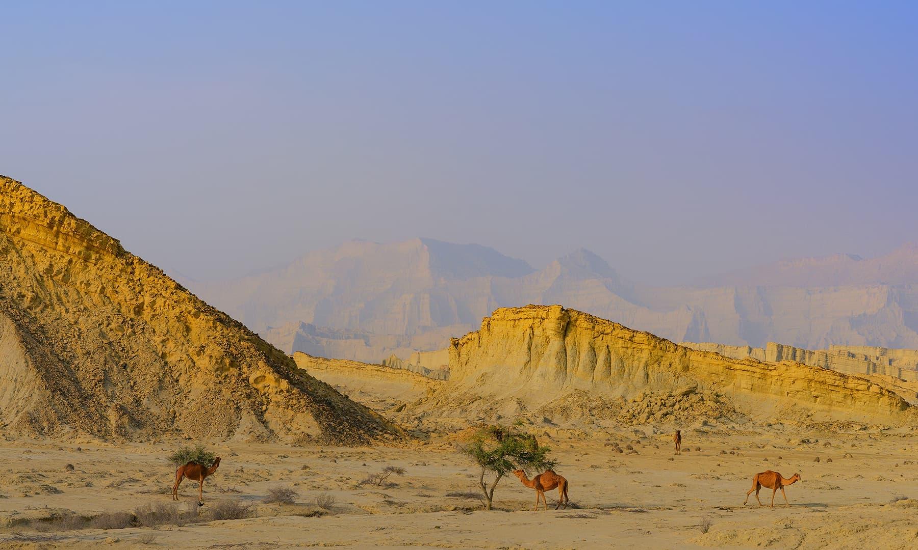 ہنگول نیشنل پارک—سید مہدی بخاری