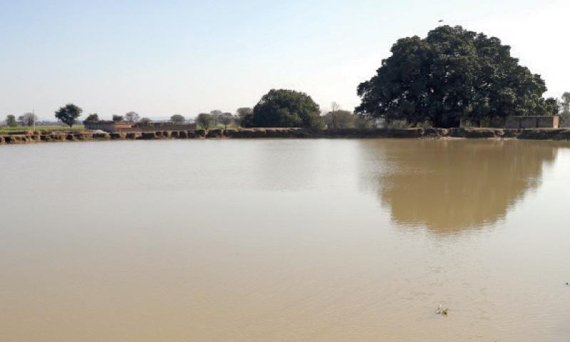A large ancient pond and banyan tree remain a landmark of the Dariala Sehgan village in Gujar Khan tehsil. — Dawn