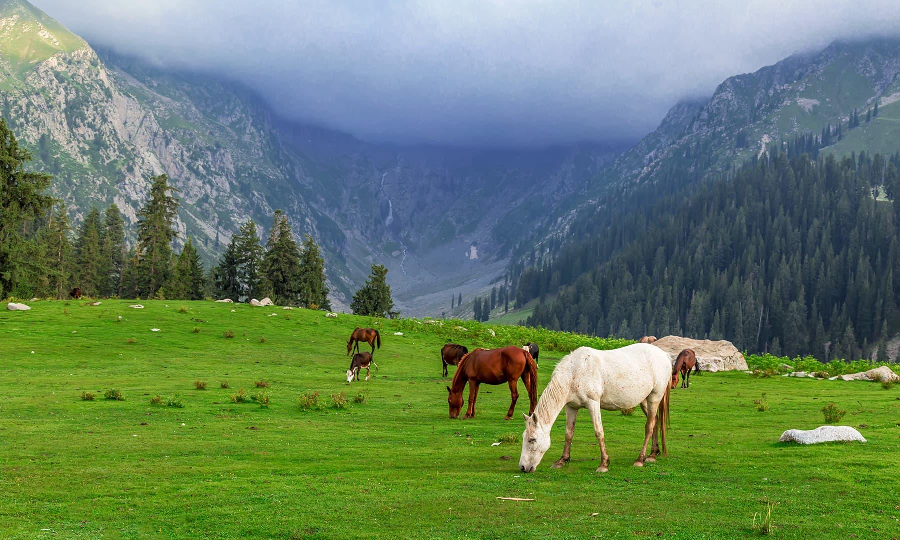 وادی کمراٹ کی خوبصورتی سمیٹنے کے لیے پشاور سے ہمارا پہلا ٹؤر 2011ء میں ہوا—رانا محمد اکمل
