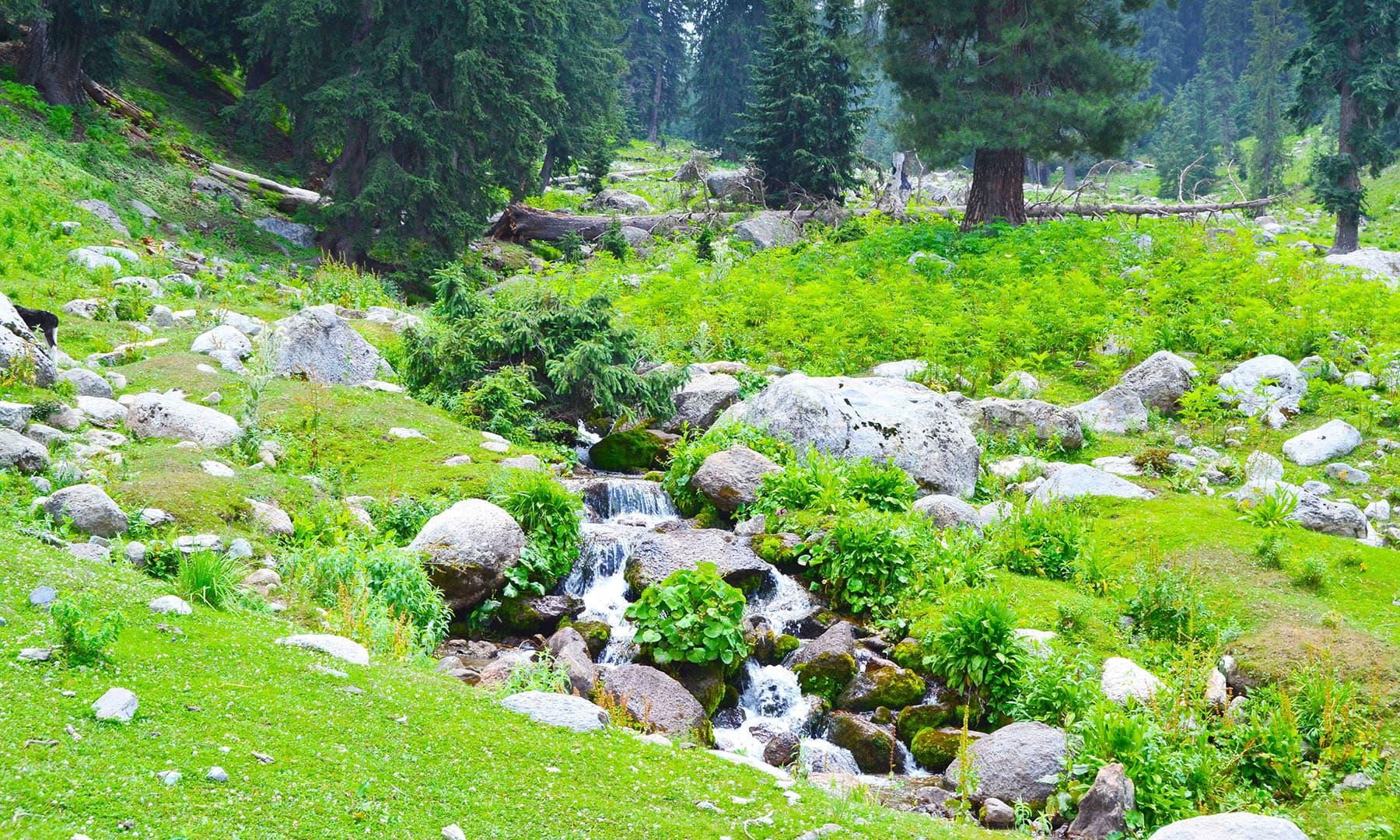 کٹورا جھیل کا ٹریک بھی انتہائی خوبصورت ہے—عظمت اکبر