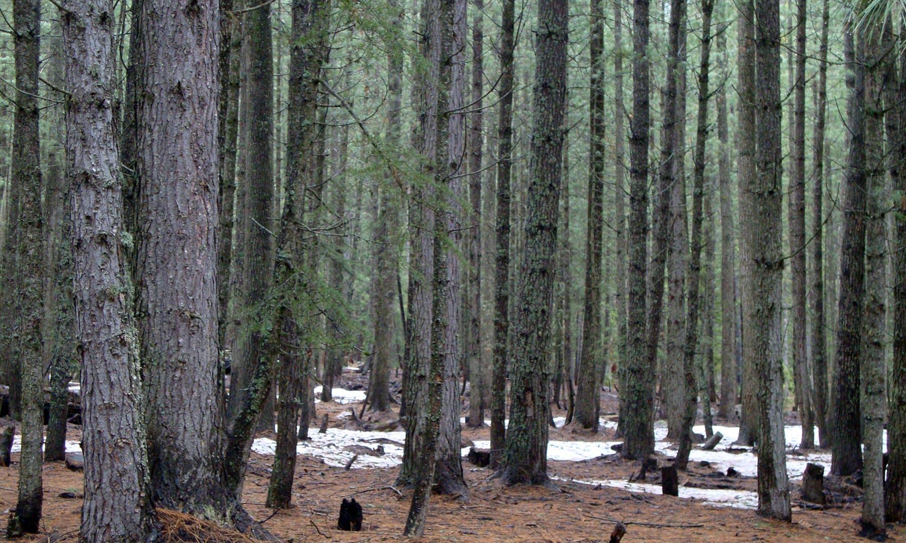 جنگلات سے گزرتے ہوئے—عظمت اکبر