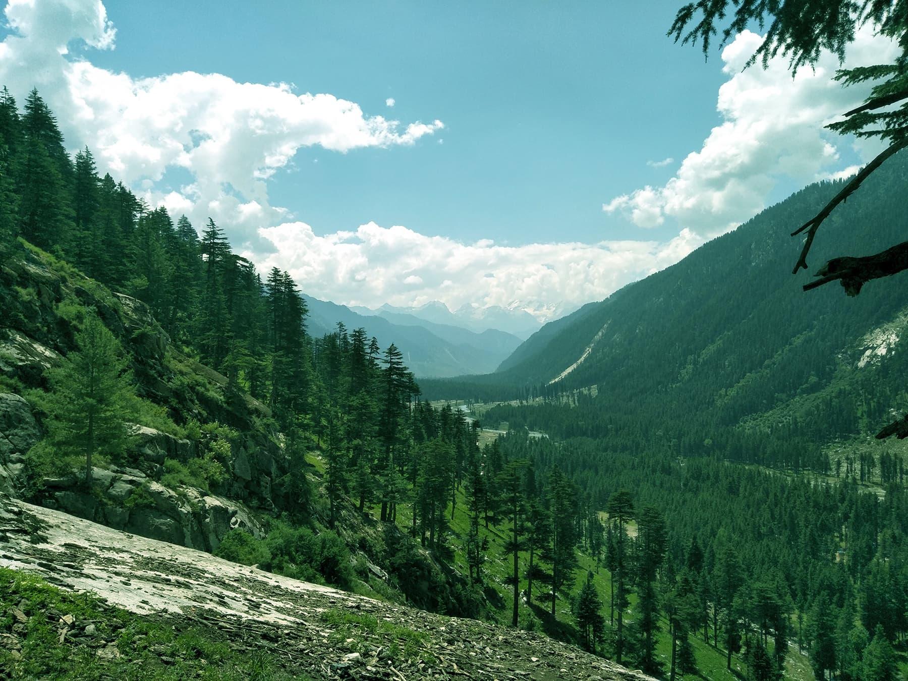 کمراٹ کے جنگلات کا ایک خوبصورت منظر—عظمت اکبر