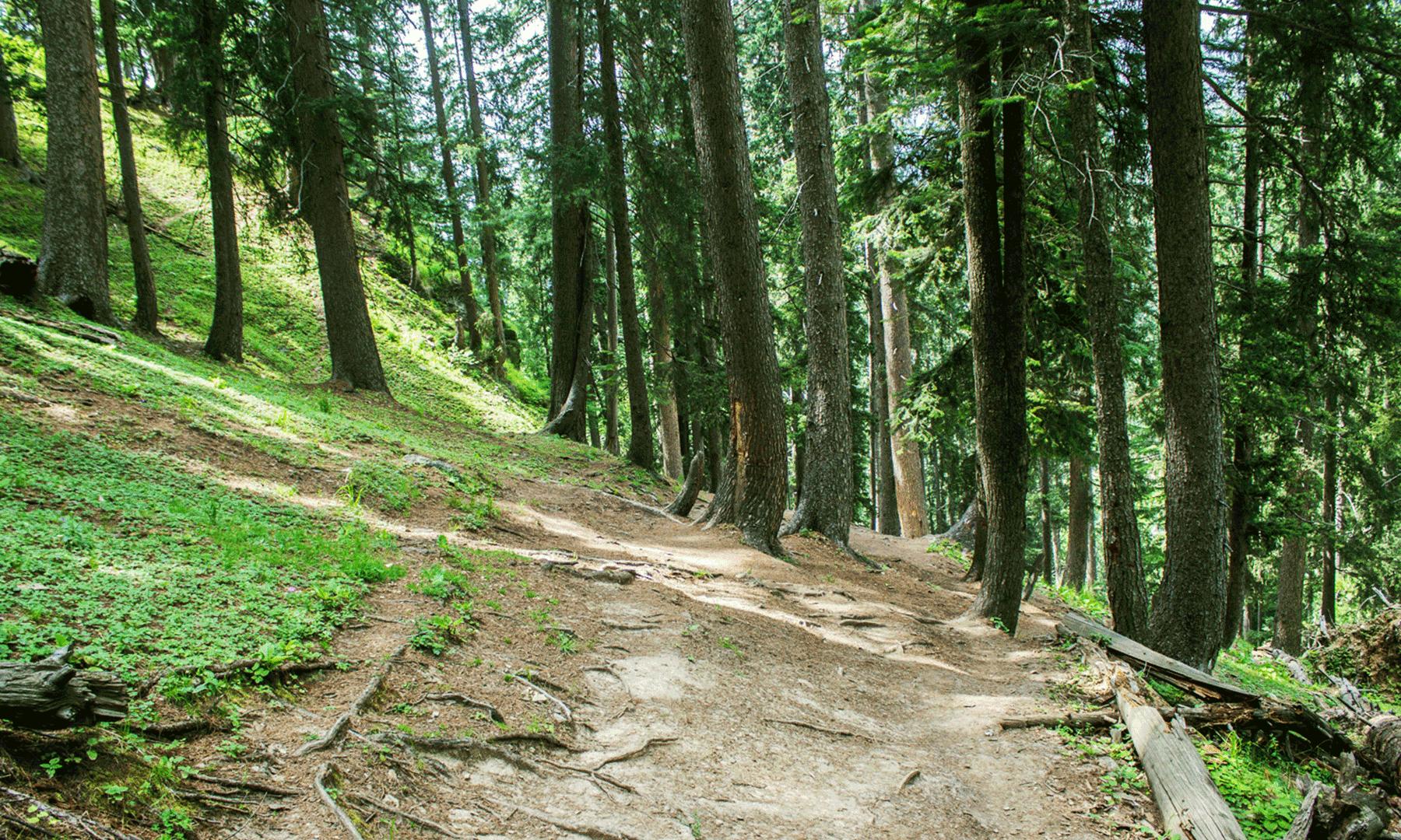 جندری سے جہاز بانڈہ کو جانے والا ٹریک انتہائی خوبصورت اور گھنے جنگل پر مشتمل ہے
