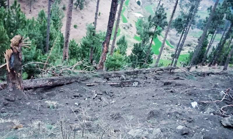 A picture showing damage caused to trees by the Indian strike. —ISPR