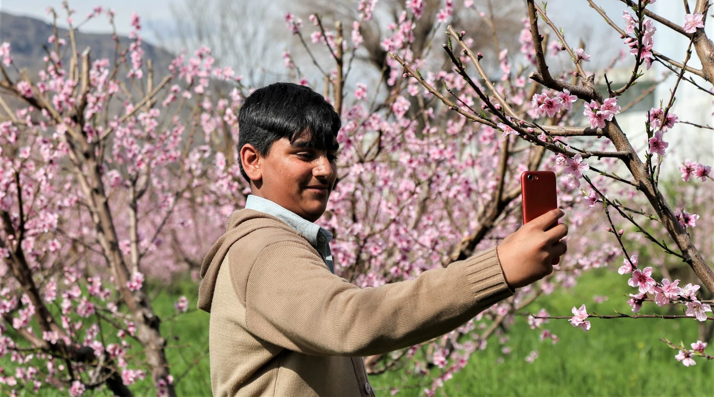 Others were also busy taking selfies with their cell phones in the apricot orchards—Photo by author