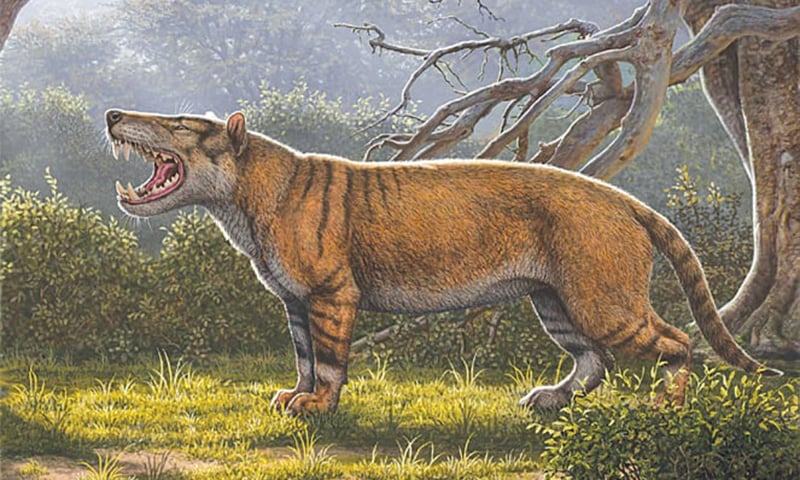 AN artist's rendition of the gigantic mammalian carnivore that lived 22 million years ago in Africa.—AFP