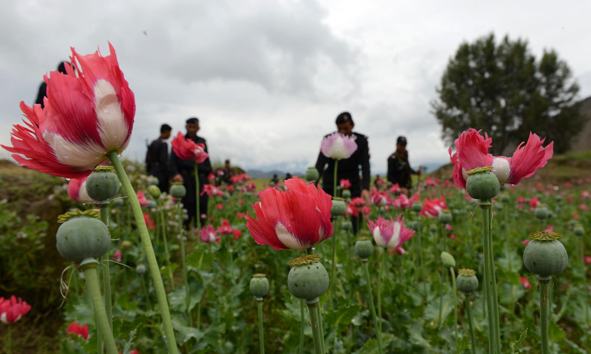 US has provided an overall $5.1 million grant to the provincial government to combat poppy cultivation.