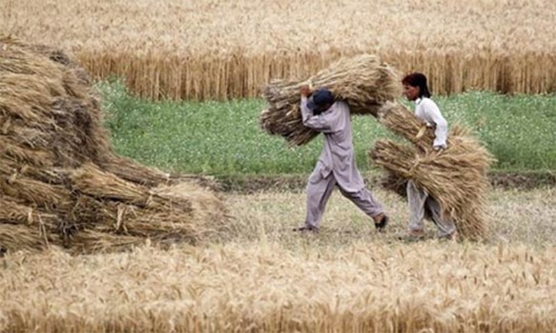 The potential for seed production and development in Balochistan, particularly onion, is beginning to yield positive results. ─ Reuters/File