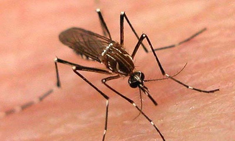 Dengue larvae found in 224 parts of city, cantonment areas