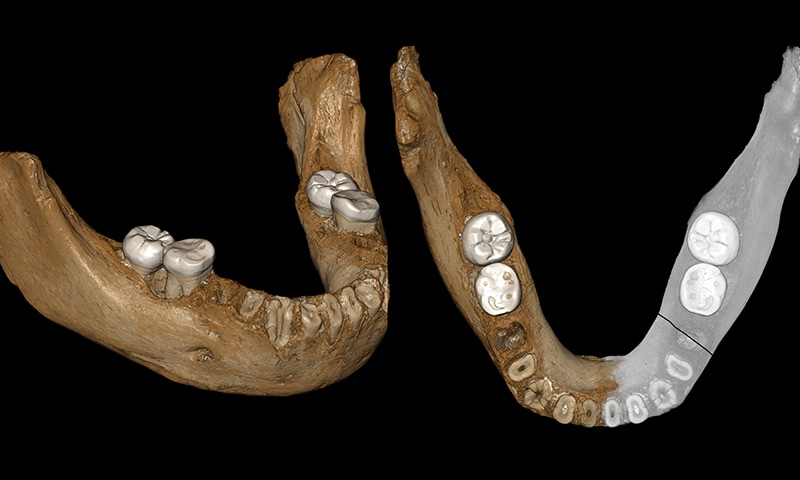 160,000 year-old remains of human relative found in Tibet: study