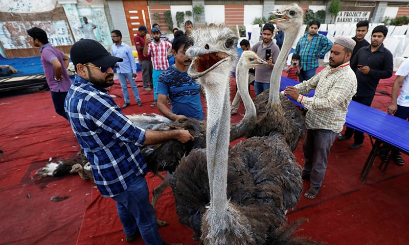 Karachi charity dishes out ostrich as Ramazan treat for poor