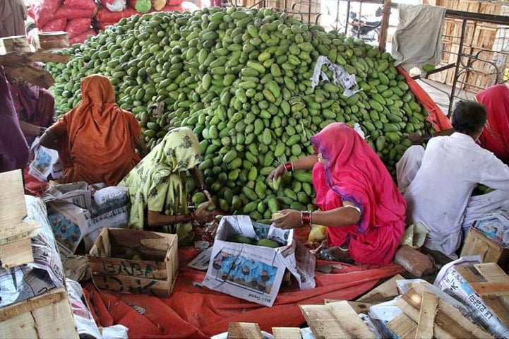 HYDERABAD: Women labourers pack raw mangoes in wooden boxes at Fruit Mandi on Thursday. The country's mango production is likely to fall after hailstroms and rains lashed out Punjab and Sindh in April.—APP