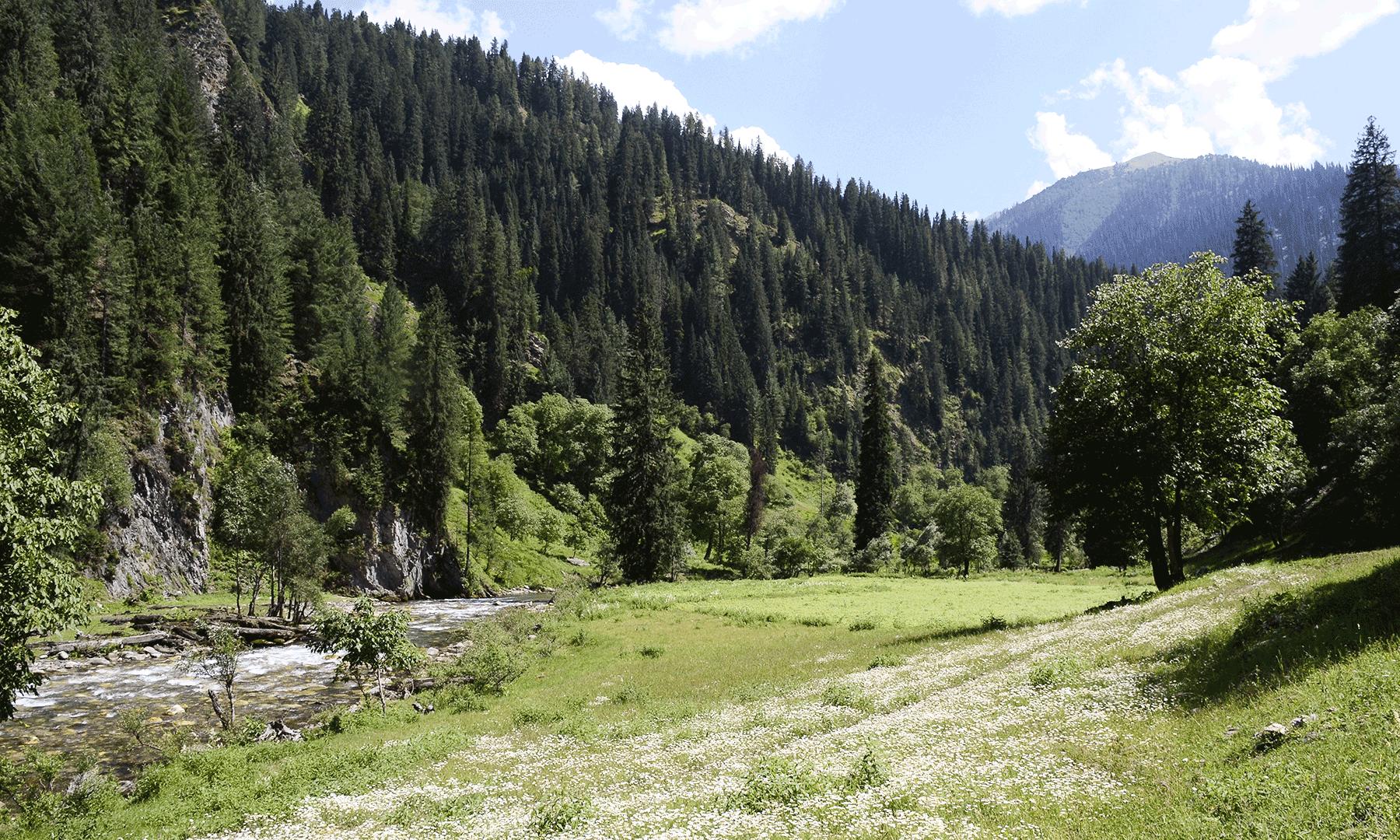 گگئی کا جنگل—تصویر  سلمان خان
