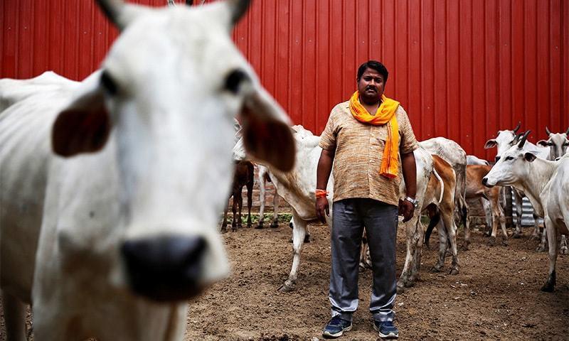 ہندو گاؤ رکشکوں کی جانب سے حملوں میں 44 افراد ہلاک ہوچکے ہیں، ہیومن رائٹس واچ — فائل فوٹو / رائٹرز