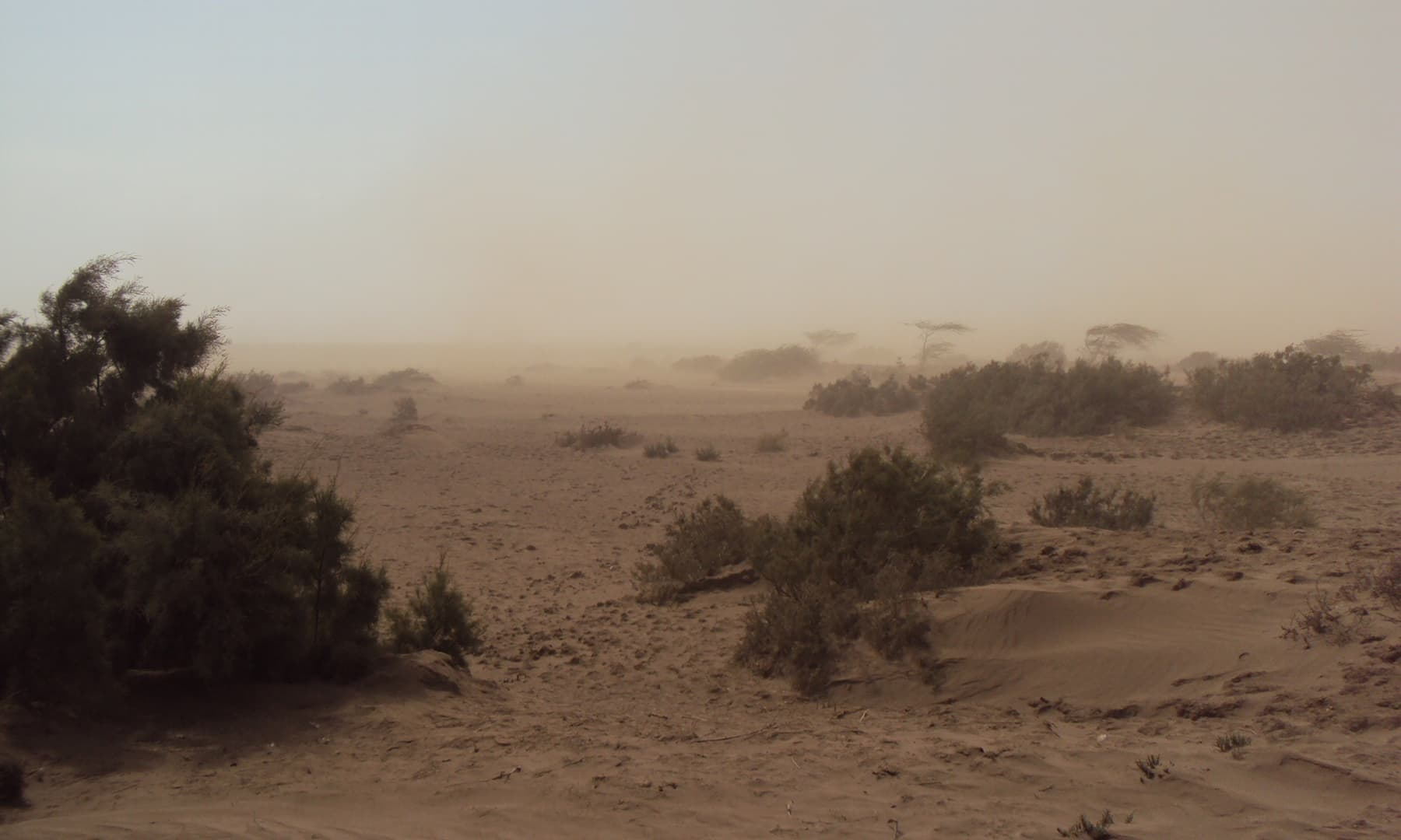 آپ اِس ساحلی پٹی میں دن کے 11 بجے کے بعد سفر نہیں کرسکتے کیونکہ 11 کے بعد یہاں مٹی کے طوفان اُٹھتے ہیں—تصویر ابوبکر شیخ