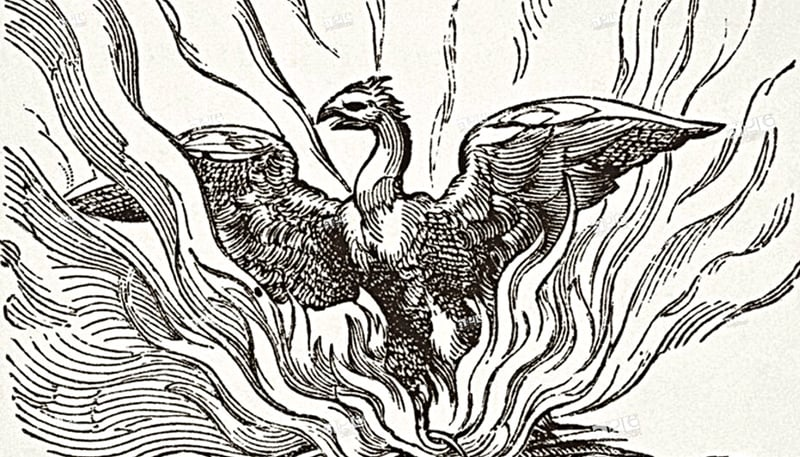 The Phoenix rising from his ashes | 17th century wood engraving from Science and Literature in The Middle Ages by Paul Lacroix, published 1878
