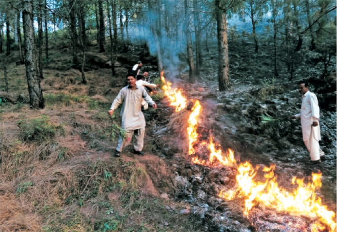 People put out fire in a forest in Murree. — Dawn