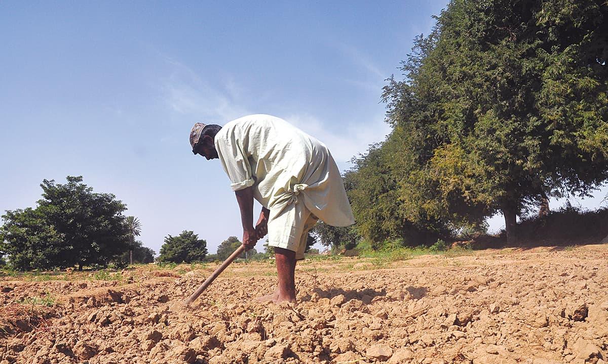 A farmer at work in rural Sindh | White Star
