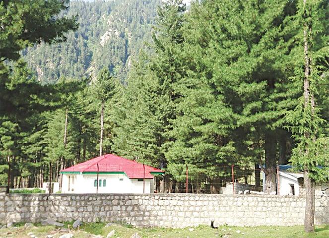Forest Inspection House in Kumrat