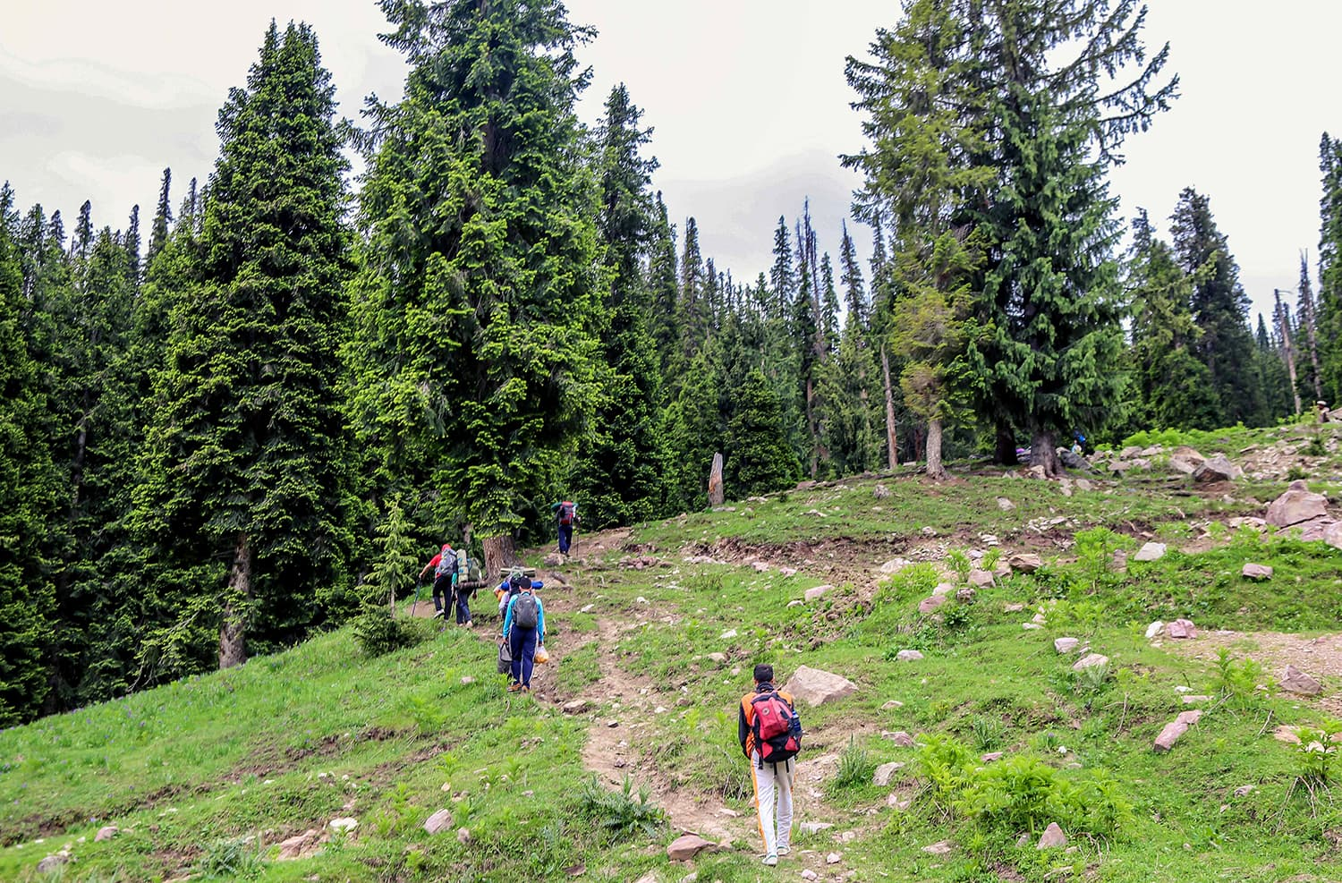 Trekkers hike from Utror forest to Chinaitshing meadows. ─ Photo by author