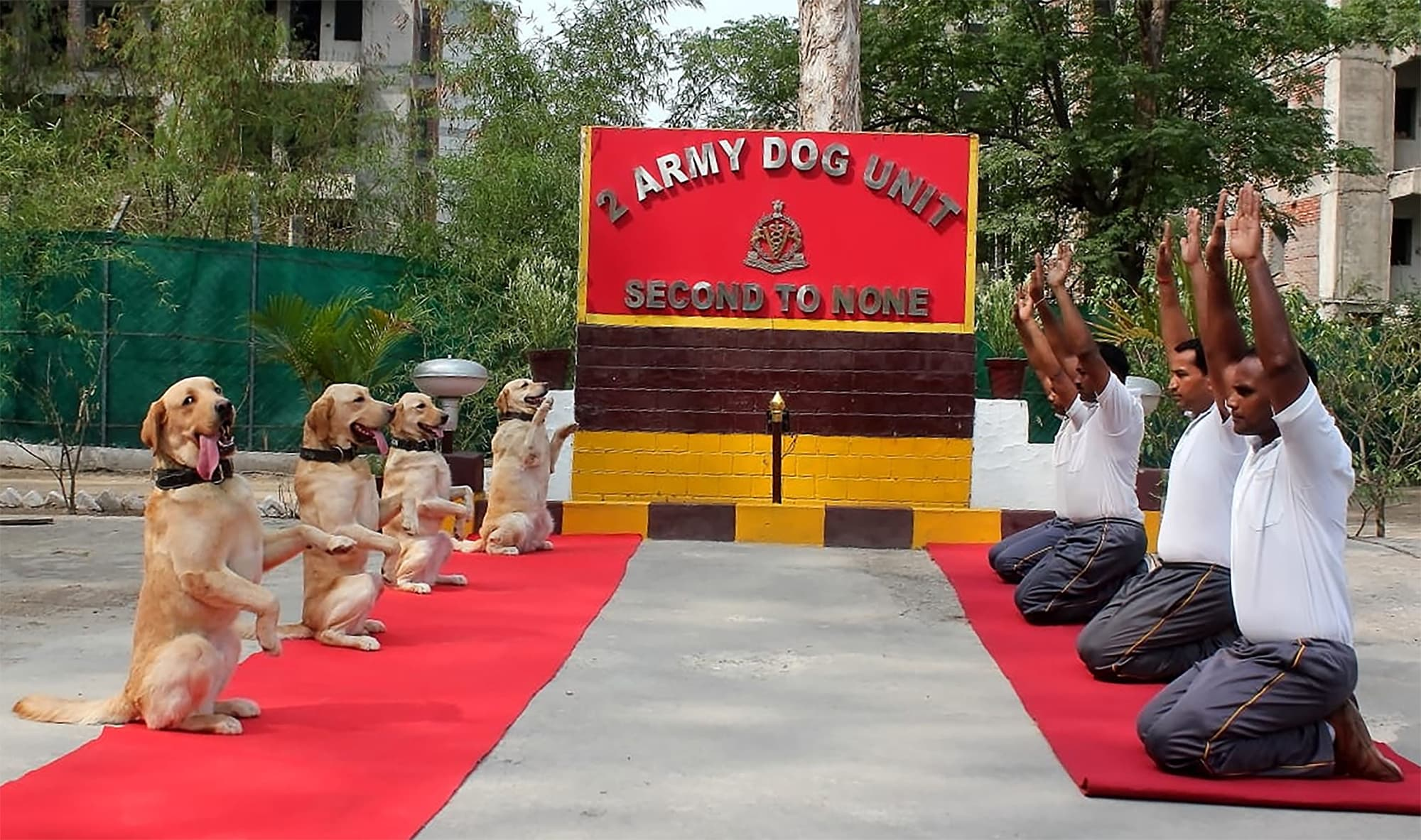 This handout photo released by the Indian Ministry of Defence and taken on June 21 shows an Indian Army Dog Unit doing yoga poses as part of an event for International Yoga Day in Jalandhar in north India's Punjab state. — AFP