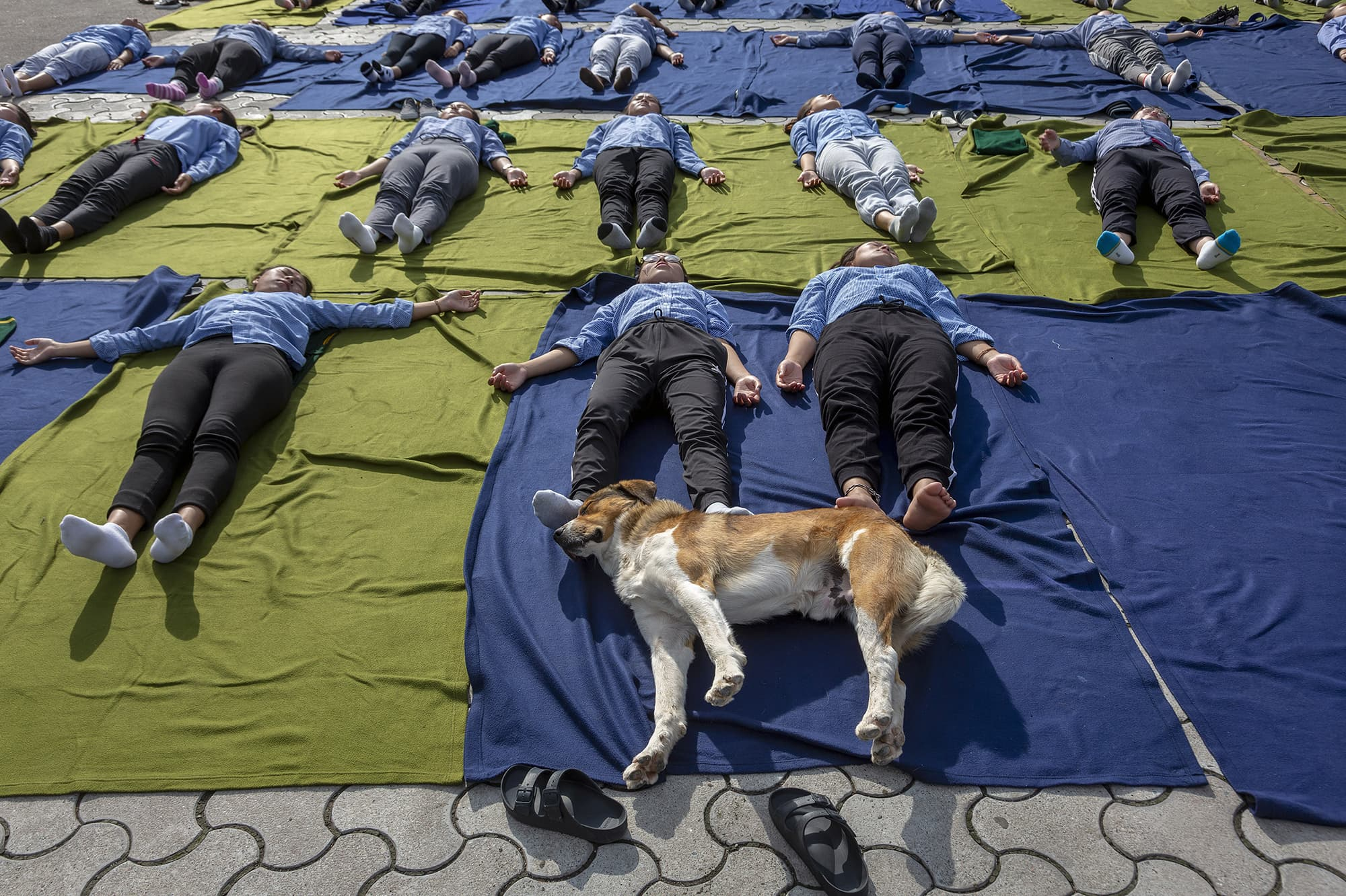 A dog sleeps as exile Tibetan students of the Tibetan Children's Village School participate in a yoga session to commemorate the International Yoga Day in Dharmsala, India on June 21. — AP
