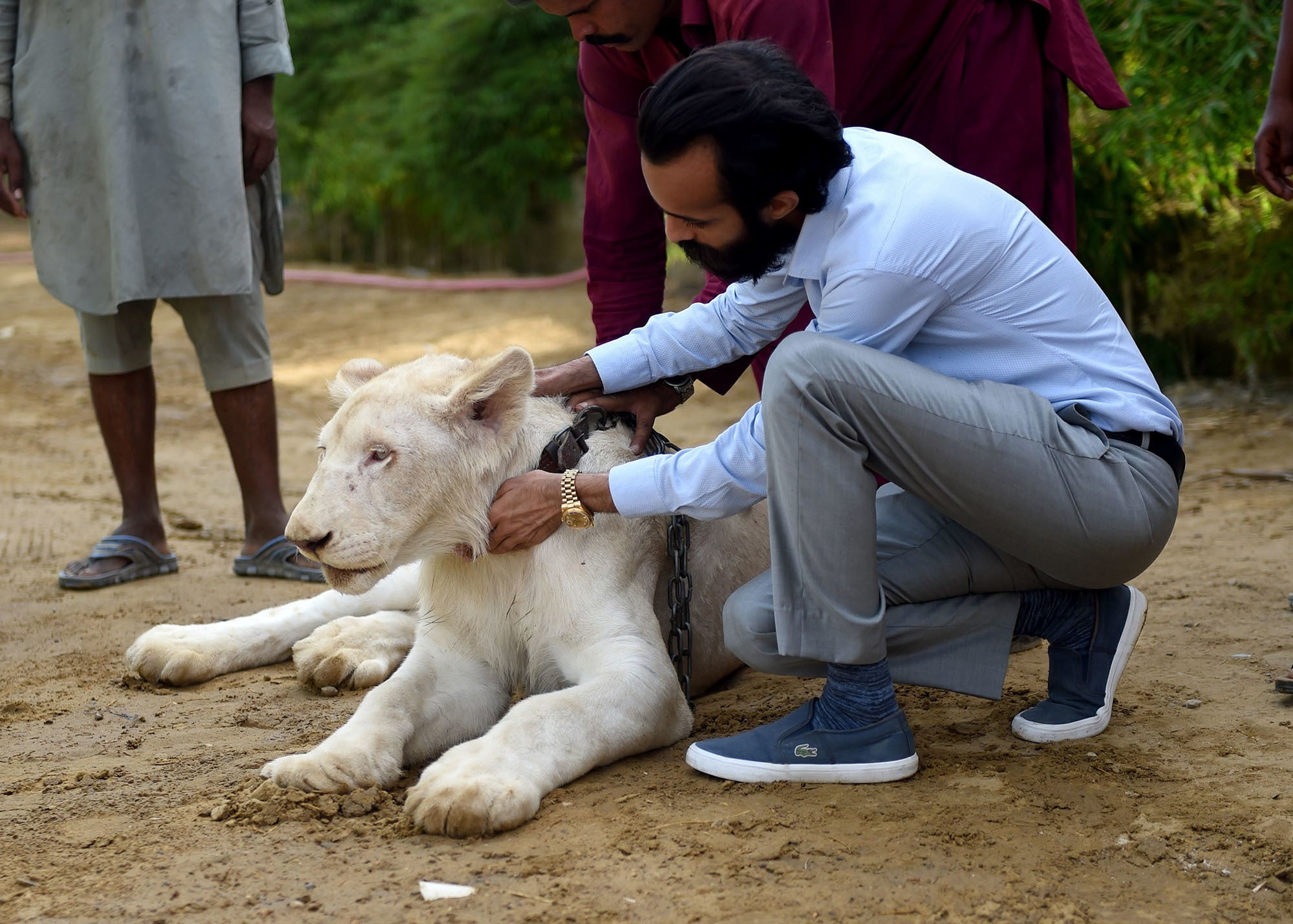 In this picture taken on May 20, Bilal Mansoor Khawaja, a private zoo owner, sits with his white lion in Karachi. — AFP