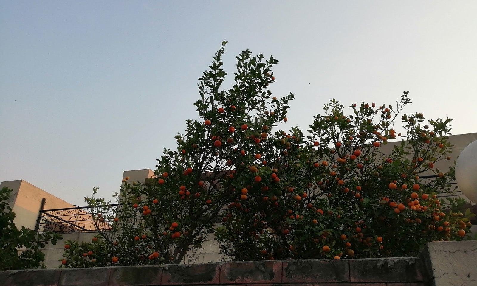 — فوٹو: ایمن محمود