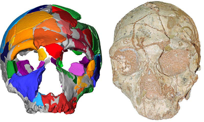 This handout picture released on July 10, by Eberhard Karls University of Tuebingen shows a reconstruction and computer model of part of a skull named Apidima 2, discovered in a Greek cave, which was determined in a study to have the characteristics of Neanderthal man. — AFP