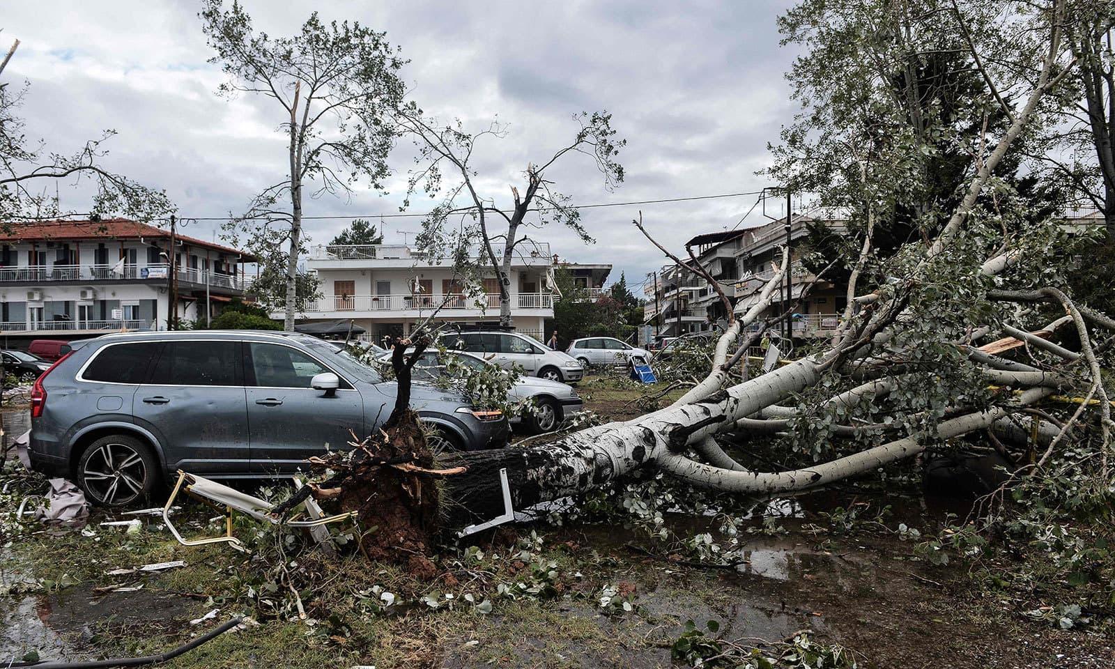 مختصر لیکن  طاقت ور طوفان کے نتیجے میں درخت جڑوں سے اکھڑ گئے — فوٹو: اے ایف پی