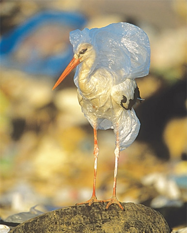 A bird trapped in a plastic bag | John Cancalosi  WWF