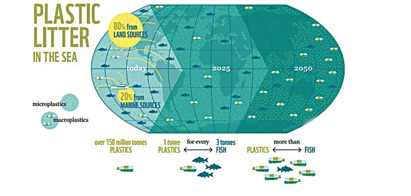 Infographic from WWF international report