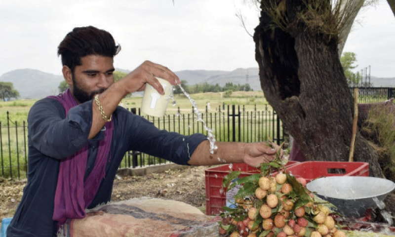 A vendor displays lychees at his roadside stall in Taxila. — Dawn