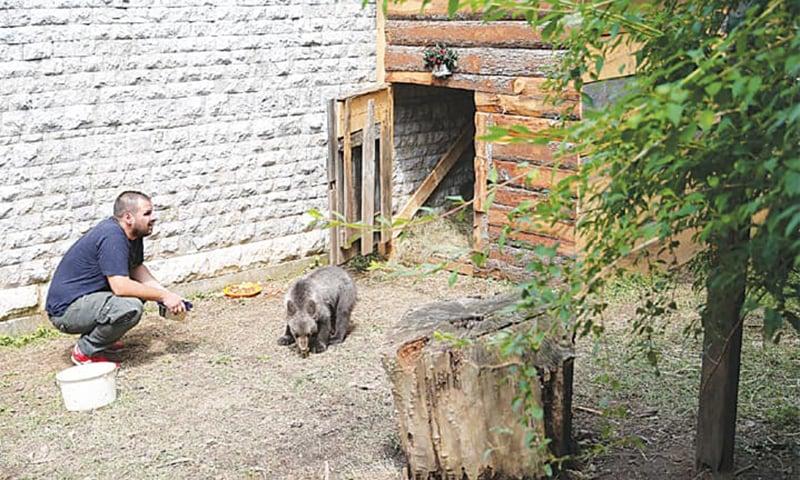 SARAJEVO: The bear cub with Semir Handzic, veterinary technician at the zoo. — Reuters