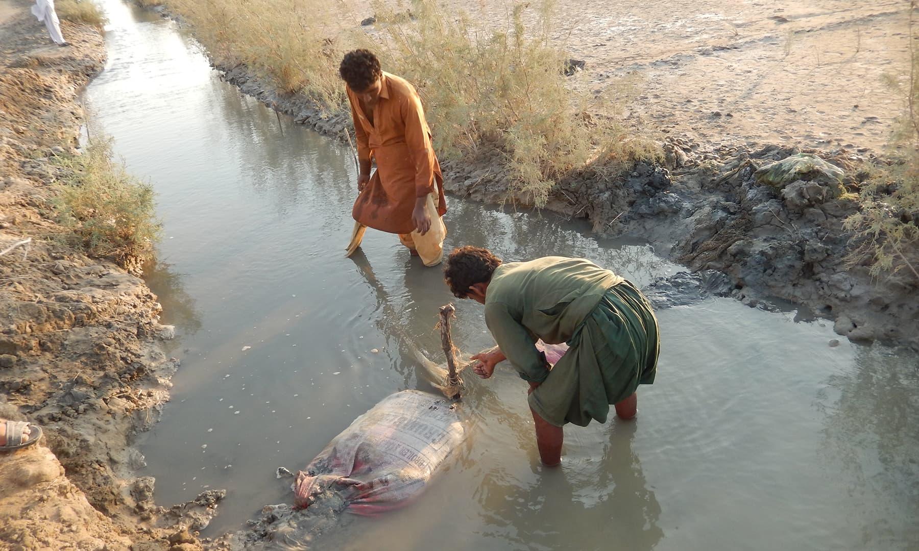 جہاں دھان کی فصل ہوا کرتی تھی وہاں اب سمندر کا پانی چھوٹی چھوٹی نہروں میں آنے لگا ہے۔۔۔۔ —تصویر ابوبکر شیخ