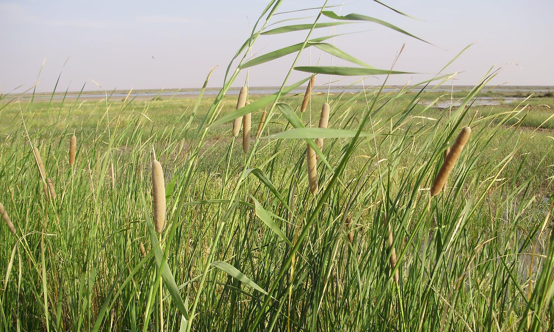 2009ء میں یہاں ہرے بھرے کھیت نظر آجاتے تھے—تصویر ابوبکر شیخ