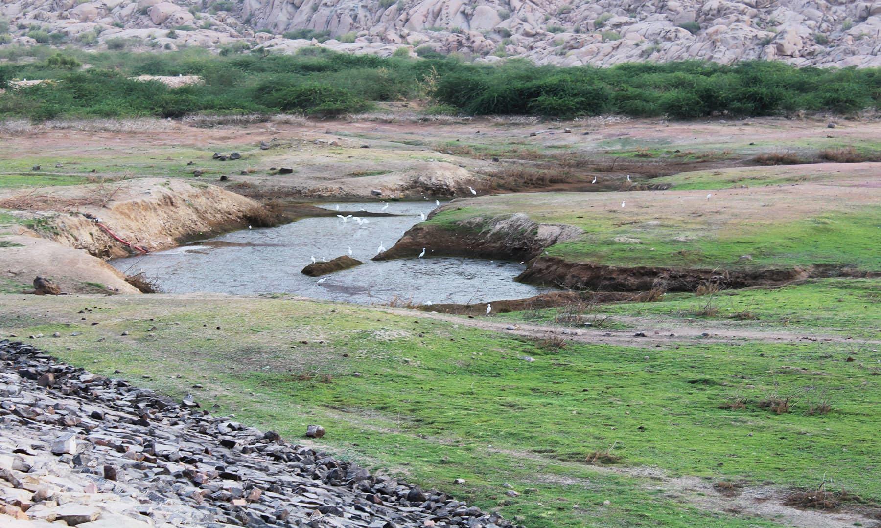 صحرائے تھر میں واقع بھوڈیسر تالاب—اختر حفیظ