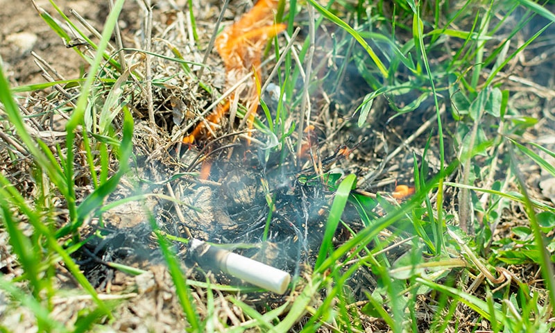 جنگلات کی آگ بھی عموماً سگریٹ ہی کی مرہون منت ہے—فوٹو شٹر اسٹال