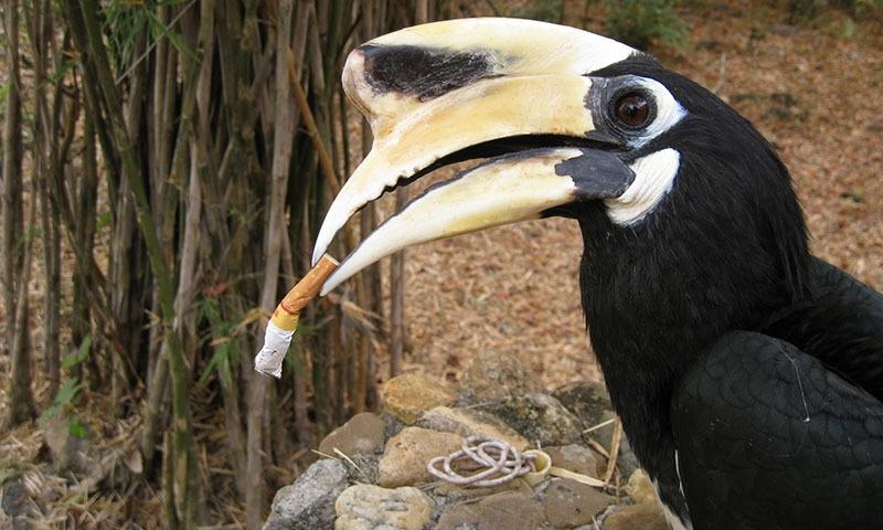 ہت سے پرندے اور جاندار انہیں کھا کر موت کے منہ میں پہنچ جاتے ہیں—فوٹو شٹر اسٹاک