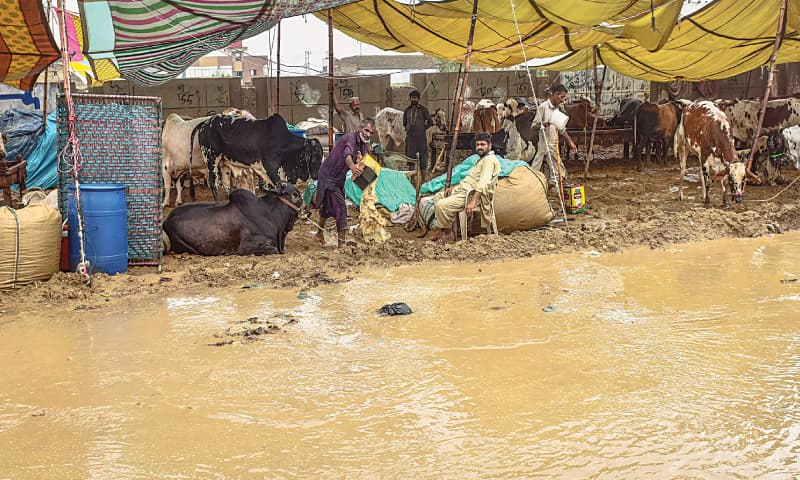 The submerged cattle market. / Photos by Fahim Siddiqi / White Star