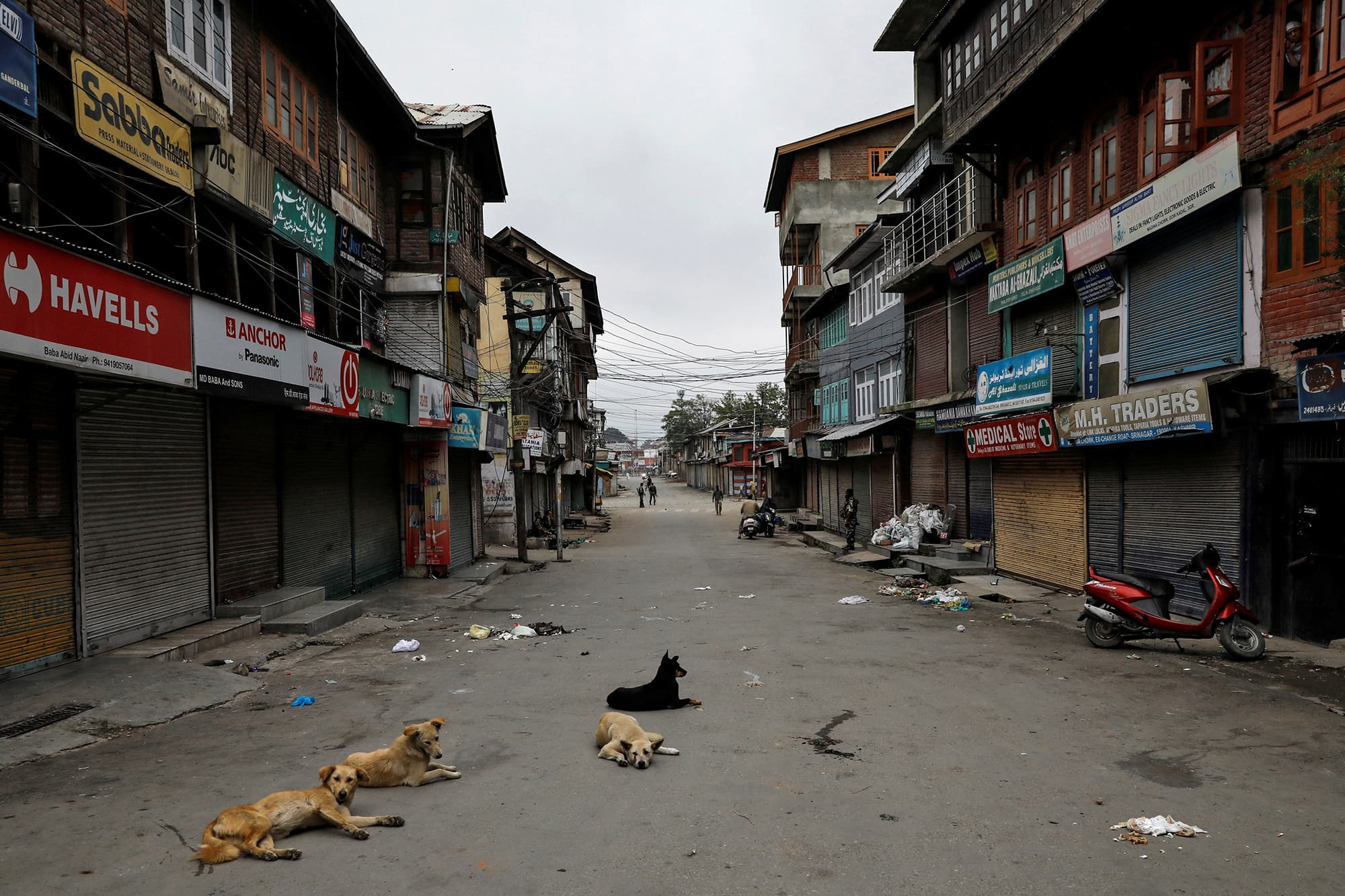 Dogs rest on an empty street during curfew in Srinagar. ─ Reuters
