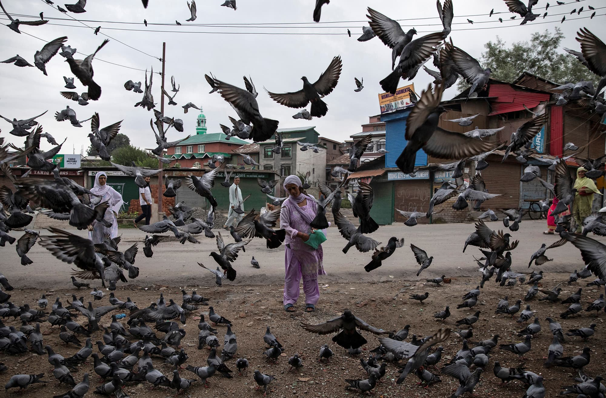 A Kashmiri woman feeds pigeons on a street during curfew in Srinagar. ─ Reuters