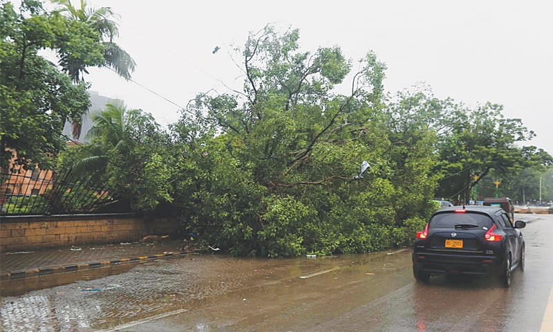 A TREE downed during Monday's downpour is seen near Sindh Secretariat. — PPI